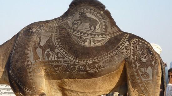 Уникальное искусство на верблюжьем фестивале Биканера