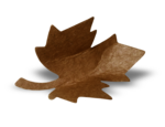 natali_autumn11_leaf8-sh2.png