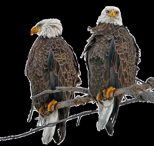 Ptice..... 0_ec0c2_829deaf6_L