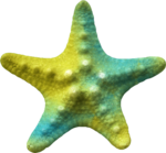 MRD_SeaMemories_yellow-blue-starfish.png
