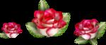 Carena Pink Gerbra 23.png