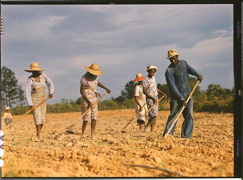 Chopping cotton on rented land near White Plains. White Plains, Greene County, Georgia, June 1941. Reproduction from color slide. Photo by Jack Delano. Prints and Photographs Division, Library of Congress