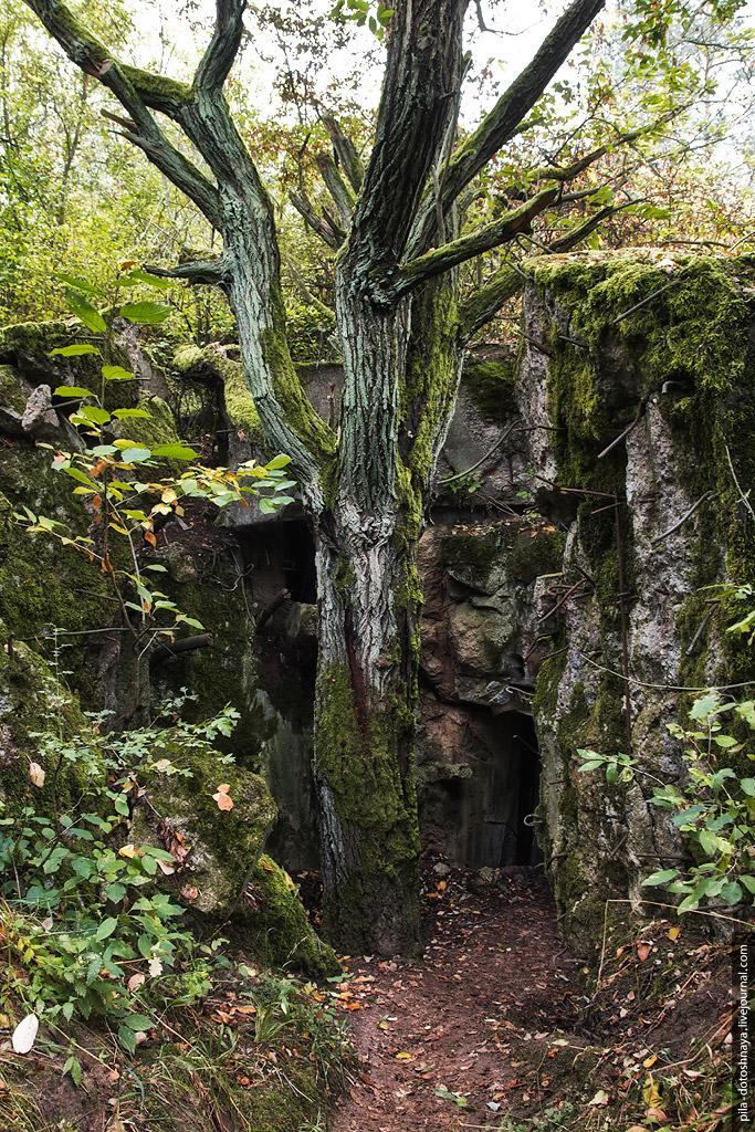 22. Многие проходы в тоннели были взорваны, а на месте бетонной свалки выросла новая жизнь.