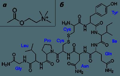 05.acetilholin-i-oksitocin.png