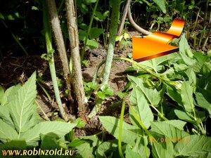 как подавить сорняки
