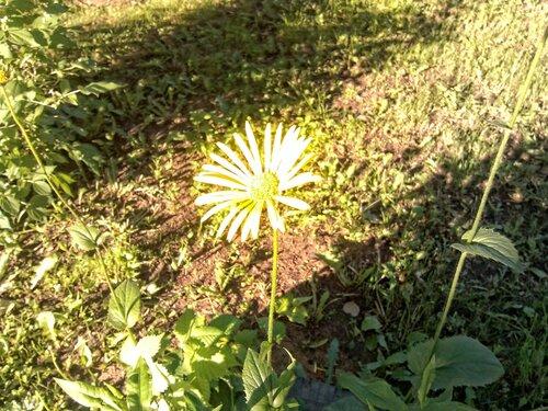 Цветик-семицветик (с HDR)
