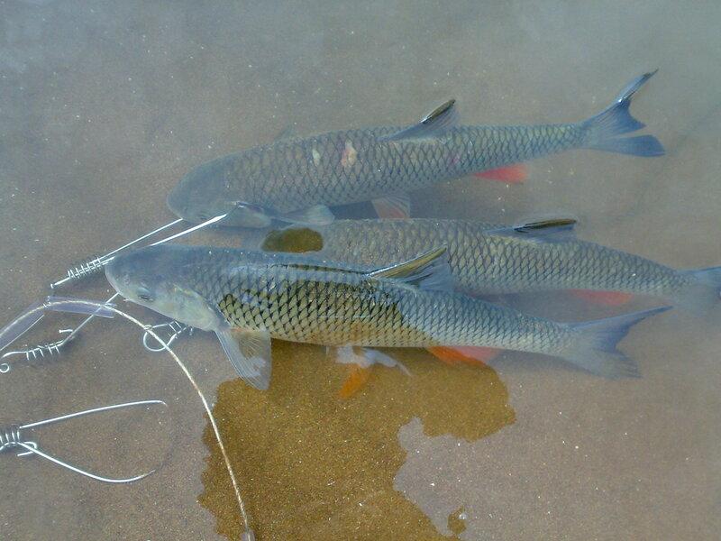 малый толкай самарская область рыбалка