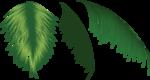 пальма1.png