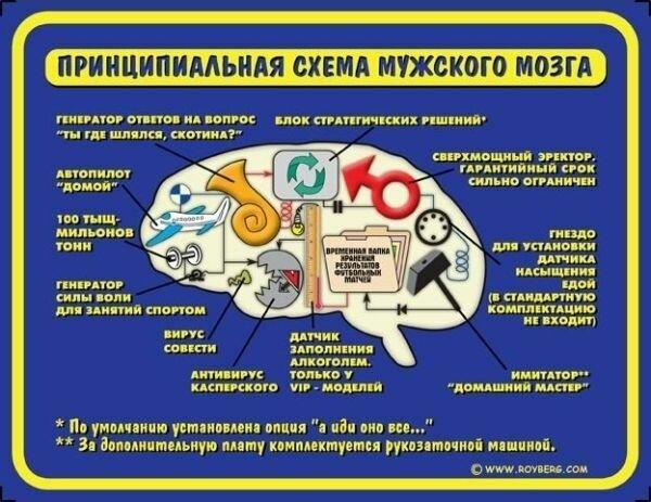 Принципиальная схема мужского мозга.