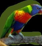 bibichebird1.png