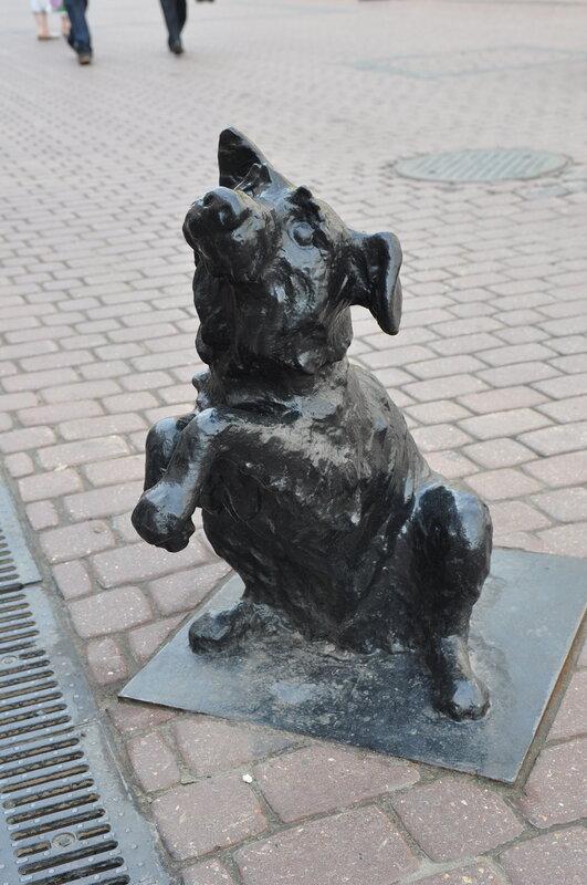 Умильная собачка - еще один постоянный обитатель Покровки