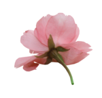 natali_design_day_flower9.png