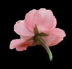 natali_design_day_flower9.png