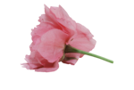 natali_design_day_flower10.png