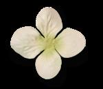 natali_design_day_flower5.png