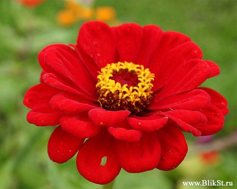 Картинки цветов из красной книги 3