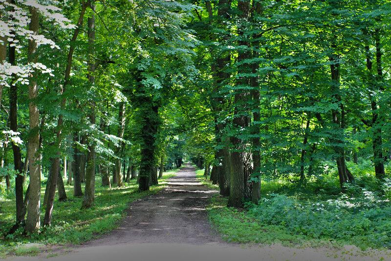 0 7944b 32f2538b XL Поездка в город Высокое, в Беларуси