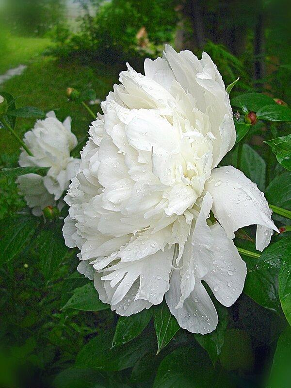 Лето в райском садике,с.Остров,цветы