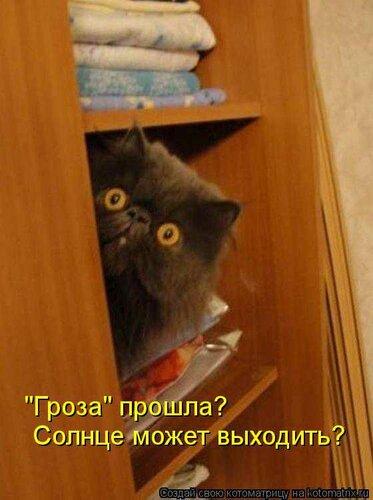 кот, шкаф