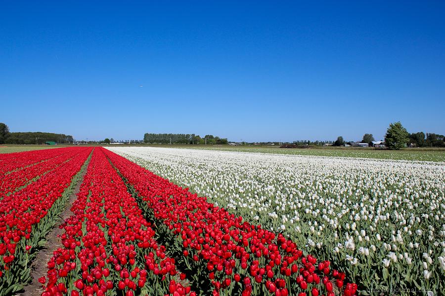 Автомобильное путешествие по Голландии