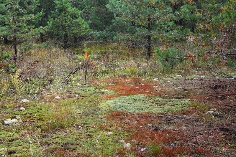 осень 15 рыжие полянки