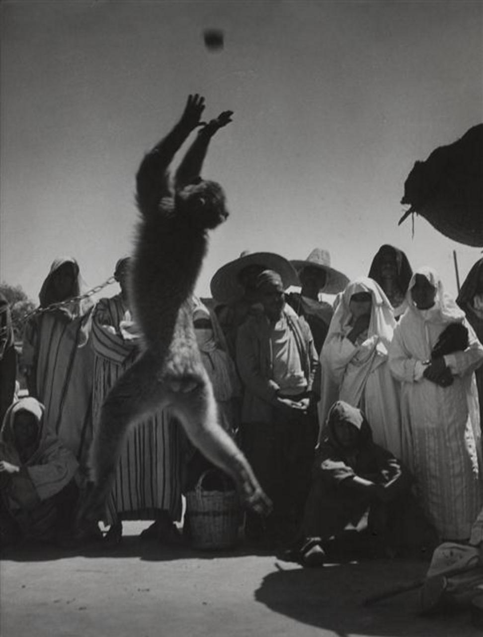 1951. Дрессированная обезьяна, Марракеш
