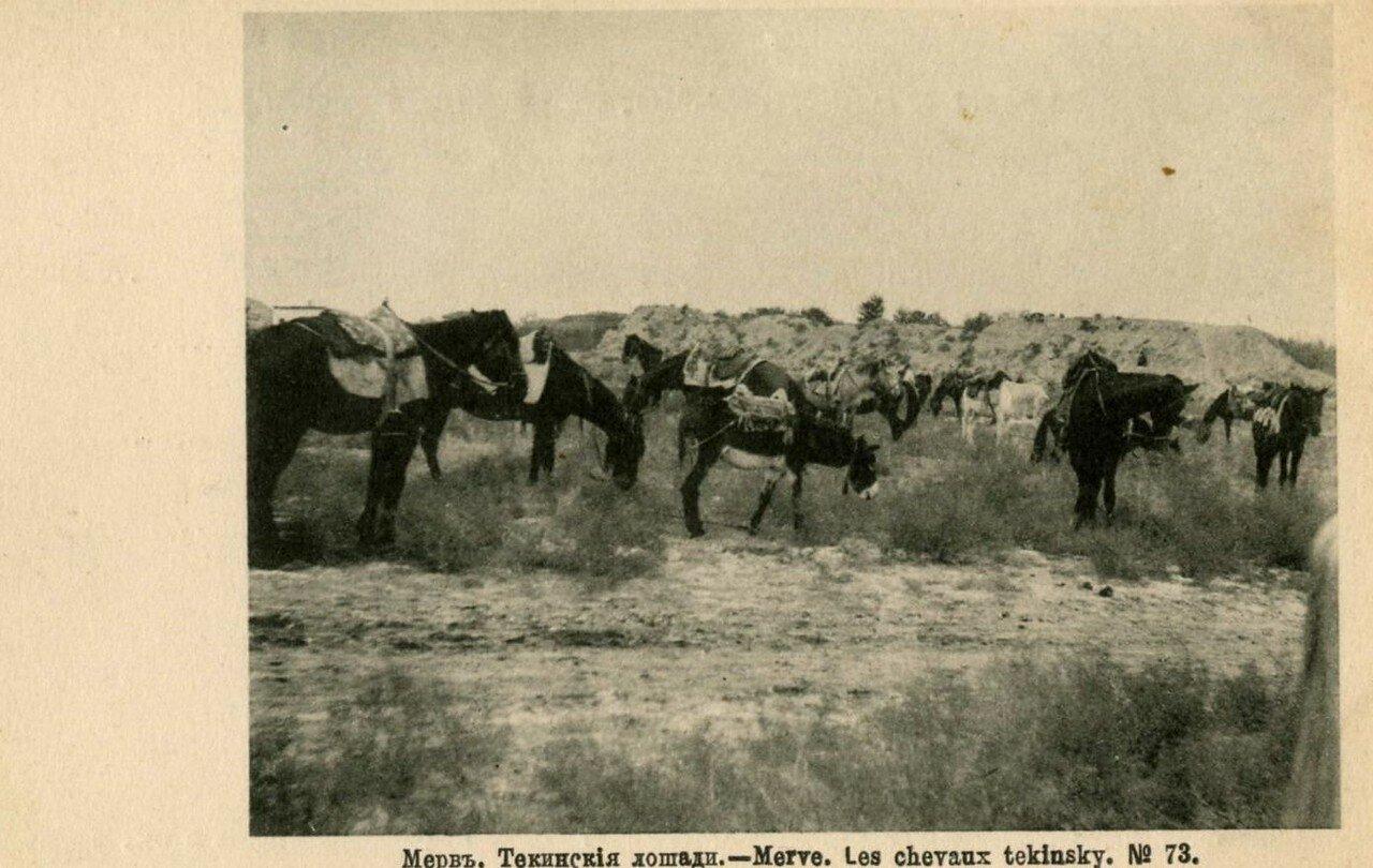 Текинские лошади