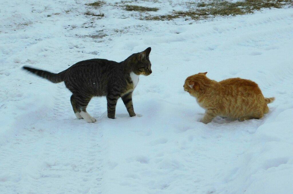 Уайетт и его котята.