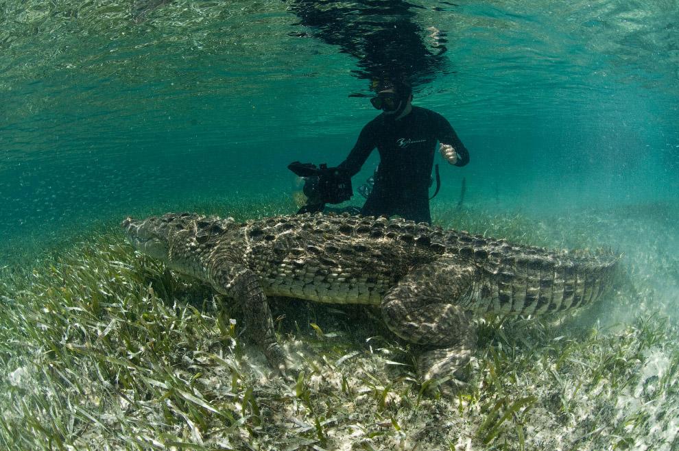9. Кстати, у крокодилов самая большая сила укуса среди животных организмов на Земле. Кто бы сом