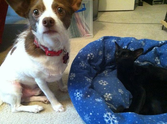 Наглые кошки оккупируют собачьи постели!