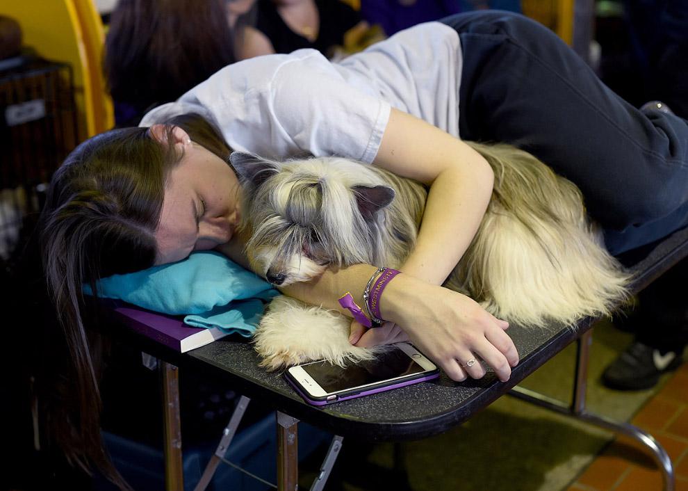 14. Совсем устал. Это пудель. (Фото Timothy A Clary):