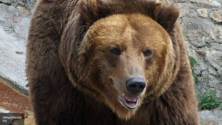 Полицейские убили зашедшего всело медведя наИтурупе