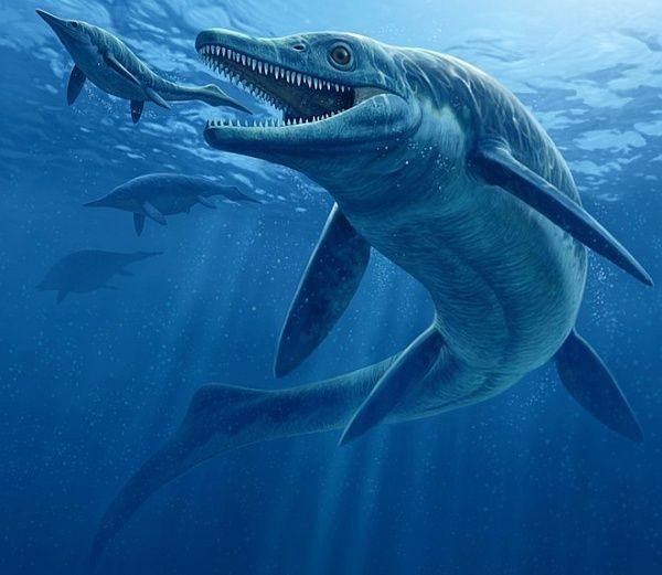 Ученые-палеонтологи впервый раз  обнаружили останки ихтиозавра