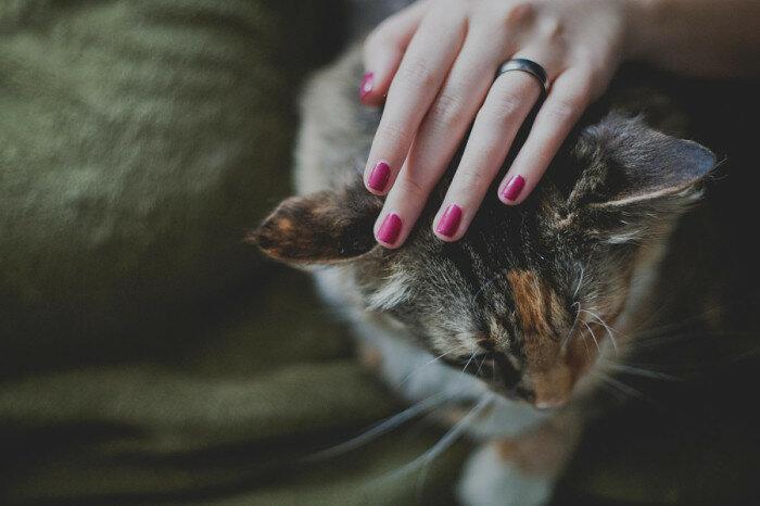 День девяносто третий. Кот мне доверяет. Автор фотографии: Келли Стеварт (Kelly Stewart).