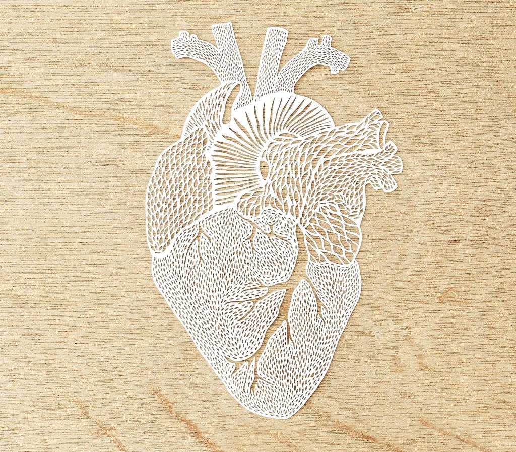 Hand-Cut Paper Anatomy by Ali Harrison