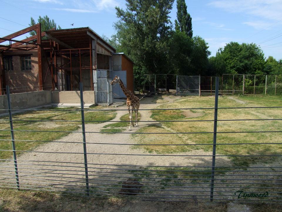 зоопарк-035.jpg