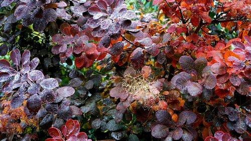 Микроклимат у кустарников осенью.