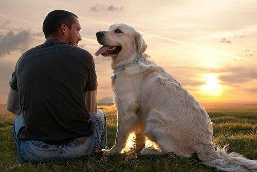 Ученые выяснили как работает мозг собаки
