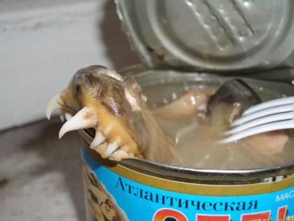 """Плотницкого обвинили в очередной краже гуманитарки: Испорченные консервы передают в школы и детсады """"ЛНВ"""""""