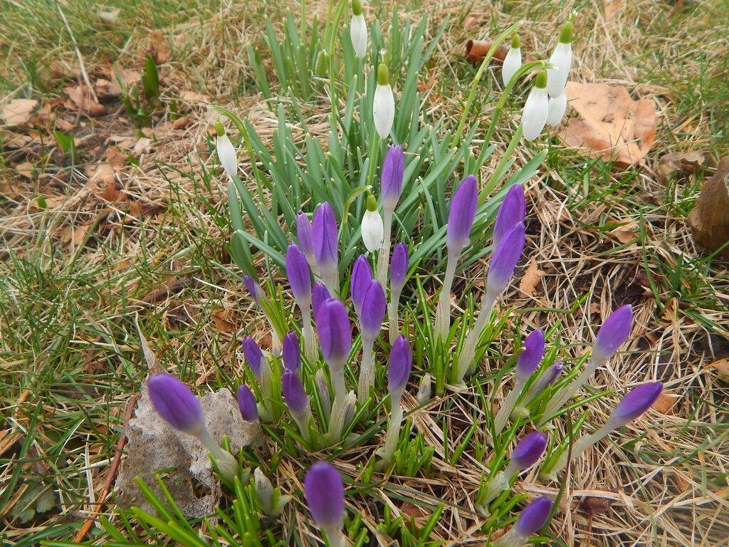 Ранней весной в ботаническом саду.