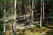 http://img-fotki.yandex.ru/get/61248/15842935.387/0_eae60_42b3ffcb_orig.jpg