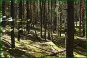 http://img-fotki.yandex.ru/get/61248/15842935.387/0_eae62_3412e9ab_orig.jpg
