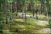 http://img-fotki.yandex.ru/get/61248/15842935.388/0_eae86_c9e08827_orig.jpg