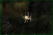 http://img-fotki.yandex.ru/get/61248/15842935.38a/0_eaed2_c79620b5_orig.jpg