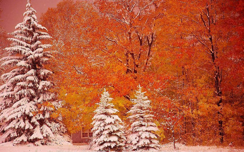 Картинки на экран осень