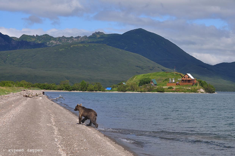 Камчатка. Курильское озеро.