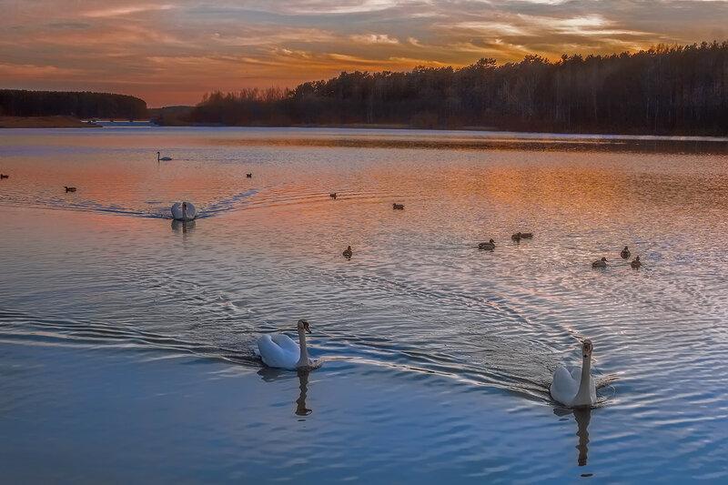Лебединое озеро на закате дня