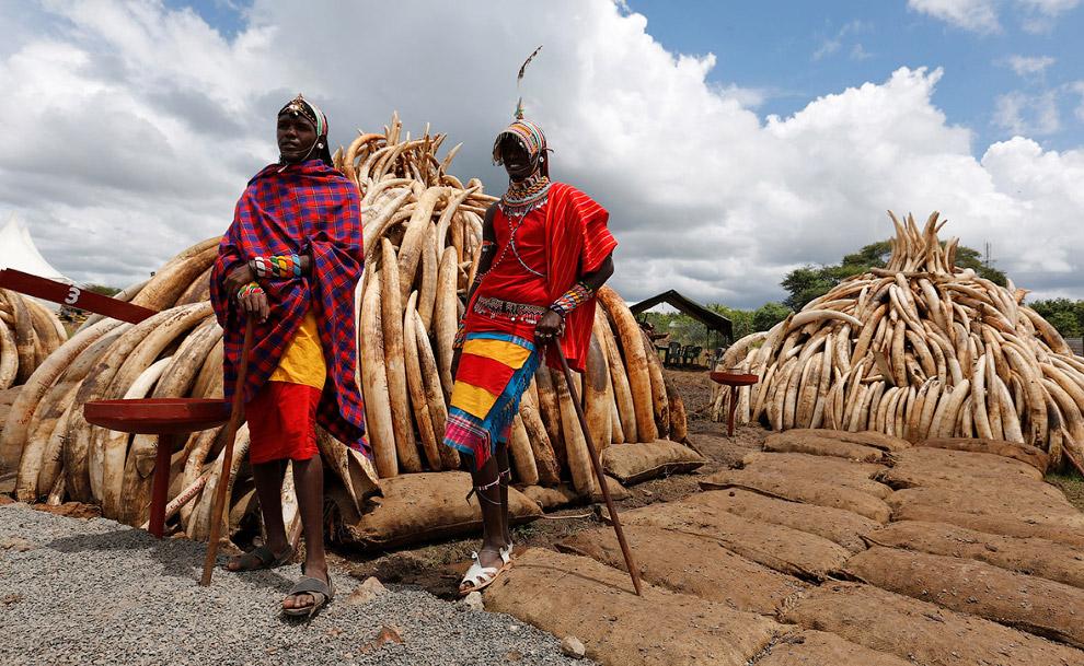 Из-за быстрого сокращения популяции слонов во многих странах был введён полный или частичный запрет