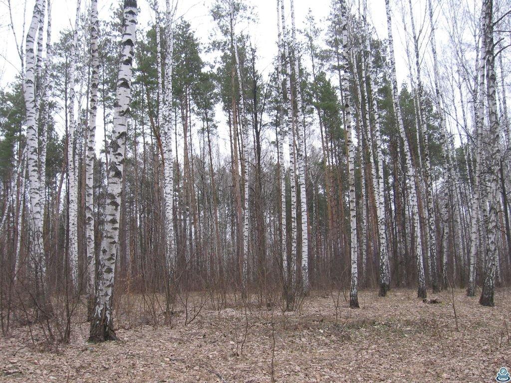 Лес юбилейный