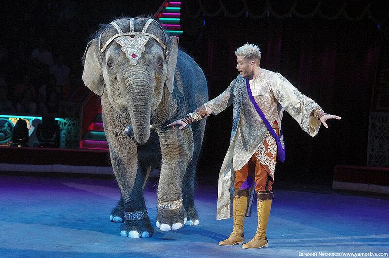 Осень. Цирк. Корниловы. слоны. 02.09.16.09..jpg